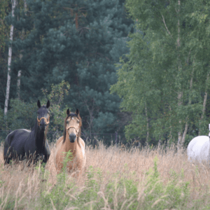 Kolaże Horsesense konie
