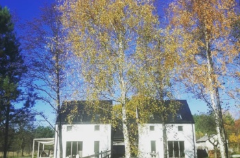 horsesense_domy