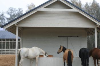 Stajnia HorseSense