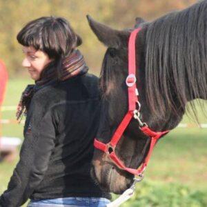 wewnetrzna droga rozwojowa horsesensownia