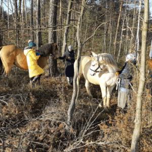 konie w lesie