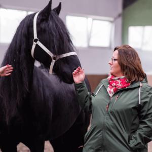 W HorseSense uczą nas konie