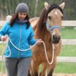 horsesense_z koniem