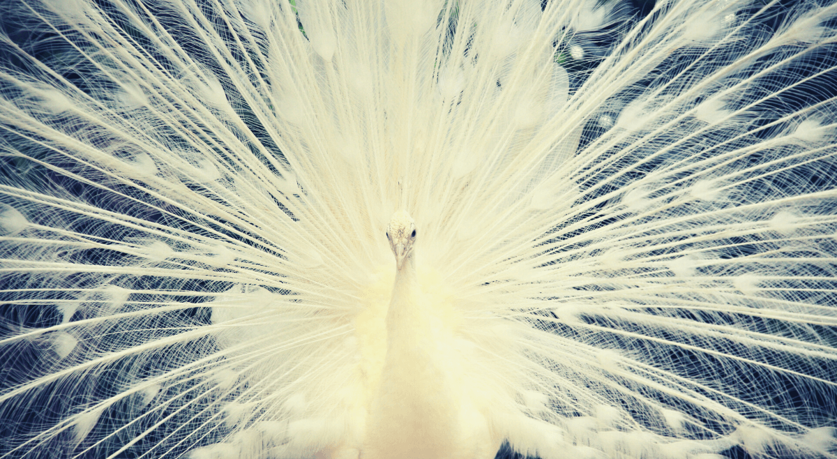 Czyautentyczność oznacza mówienie wszystkiego, co się czuje imyśli – Odcinek 42
