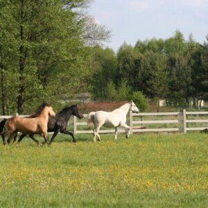 konie horsesenses